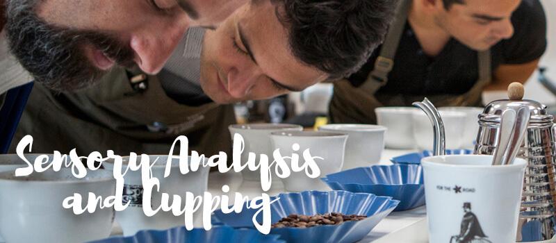 Sensory Analysis and Cupping